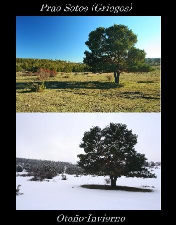 otoño-invierno_1